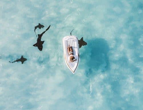 FYS 006   Shark Attack